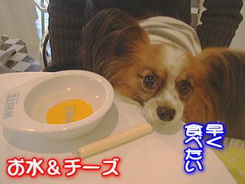 11.26お水チーズ