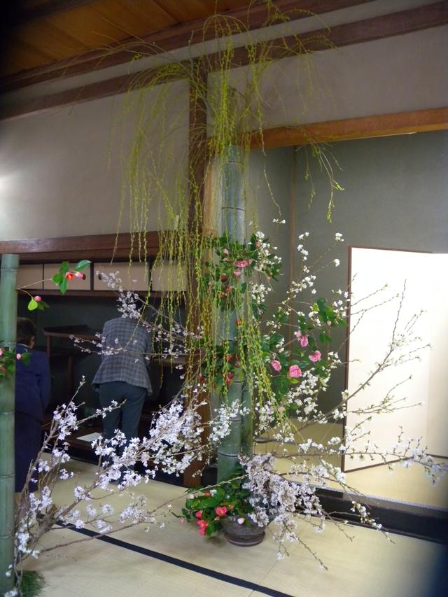 桜真竹柳ツバキ1