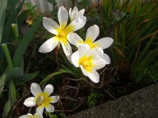 路地の花2