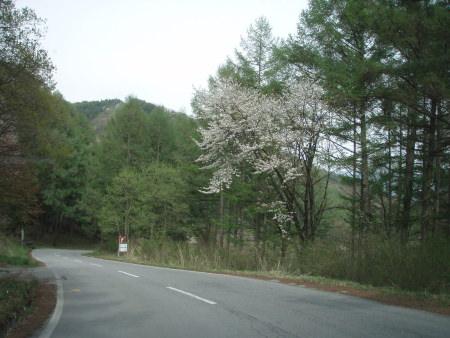 20090505-5.jpg
