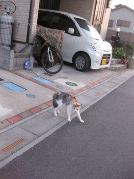 20110713neko.jpg