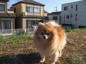 20111220ryo.jpg