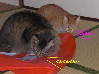 gokigen_musaku.jpg