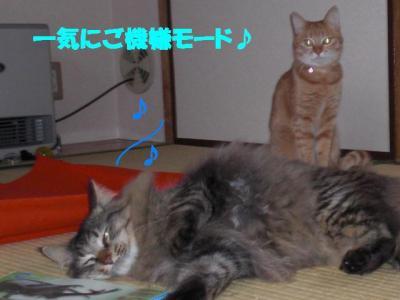 gokigen_musashi.jpg
