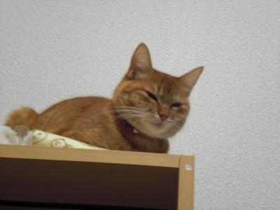 gokigen_sakura