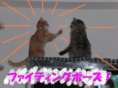 neko_punch.jpg