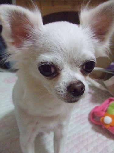 2009_0226ブログ0006