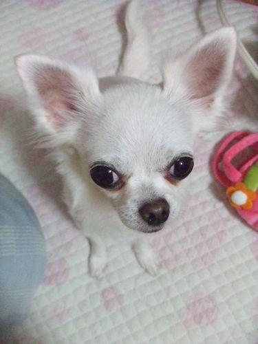 2009_0226ブログ0008
