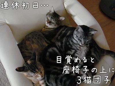 1:3猫団子