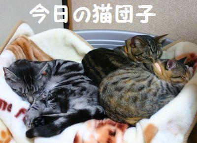 今日の猫団子