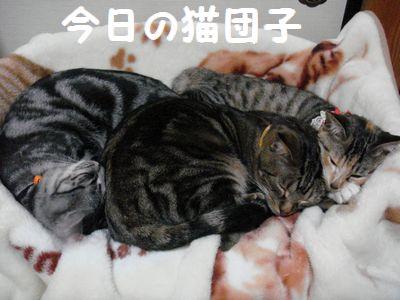 今日の猫団子1012