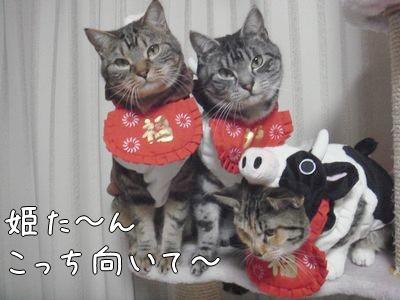 5姫こっち