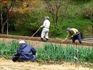 瑞宝園 つつじ 茶室 農作業 035