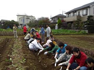 20081103芋掘り1.JPG