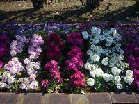 品川花壇のお花