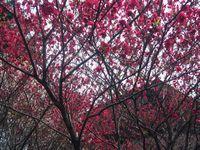 新宿御苑 お花