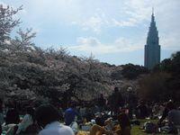 新宿御苑 広場