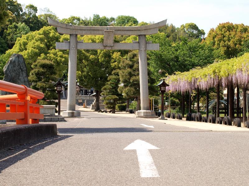 今治市 日吉 姫坂神社 フジ