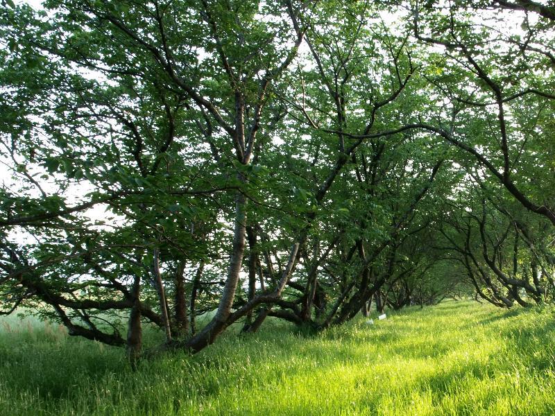 西条市 新緑の季節 風景