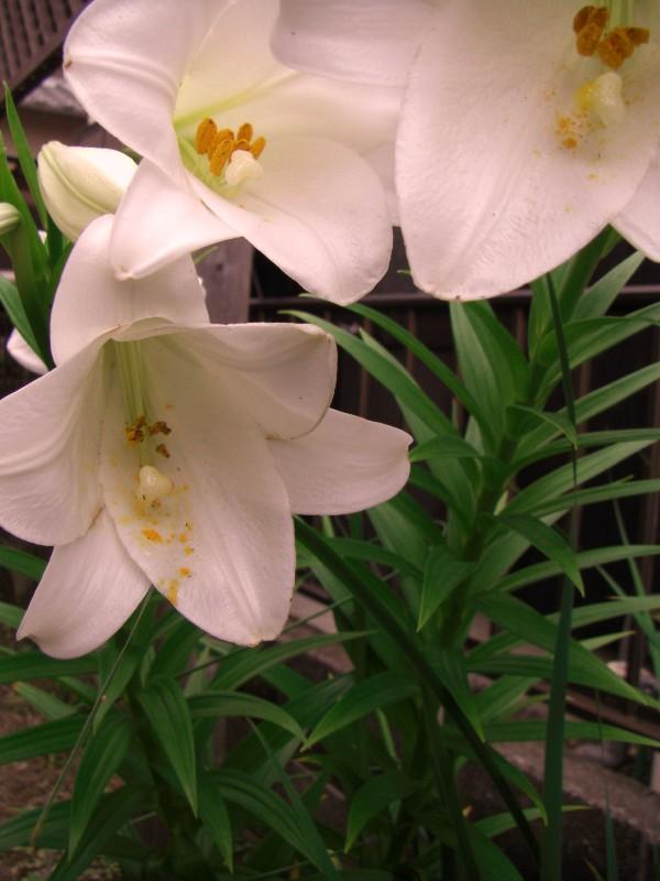 夏を彩る庭先の花