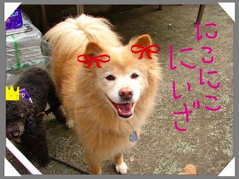 20080117211818.jpg
