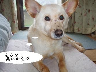 090303の画 桃太郎 011