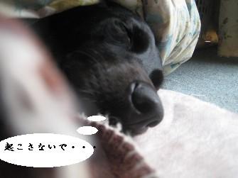 090309の画-ぱ 010