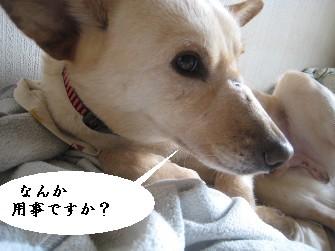090309の画-ぱ 005