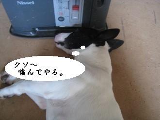 090309の画-ぱ 003