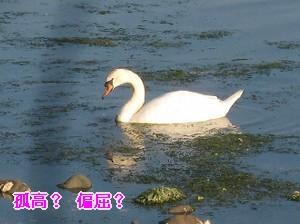 090507の画ぱ 011