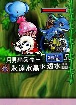 Maple0003709 (3)