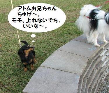 モモちゃんとアトム