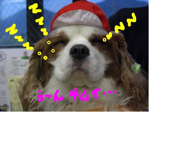 snap_sakuradoremi_200891141837.jpg