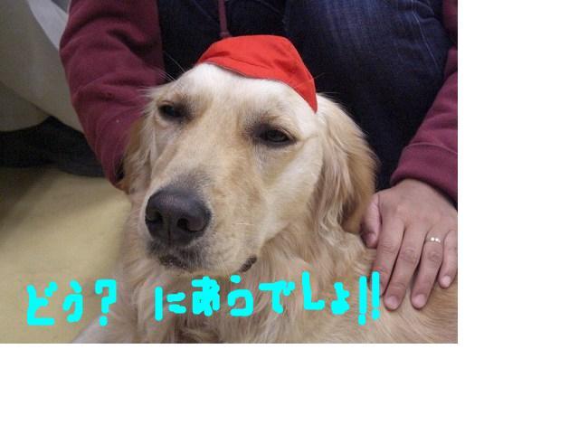 snap_sakuradoremi_200891143140.jpg