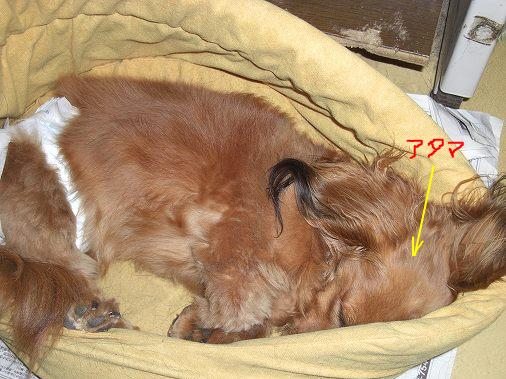 snap_sakuradoremi_200955214317.jpg