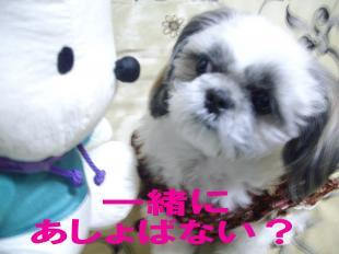 pocya03_convert_20080312233522.jpg