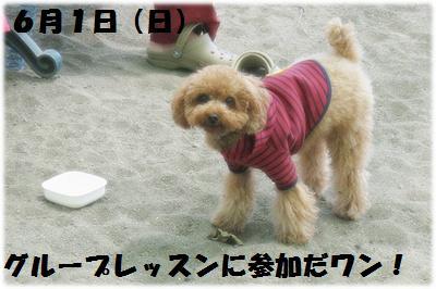 IMG_4646[1]