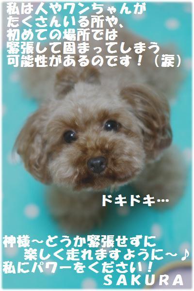 IMG_3213[1]