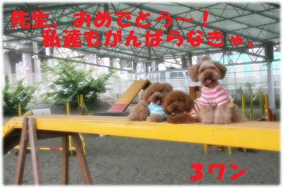 IMG_3550[2]