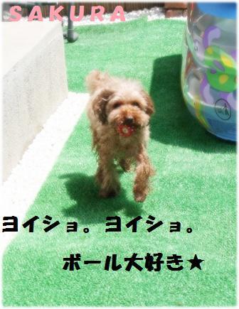 IMG_4454[1]