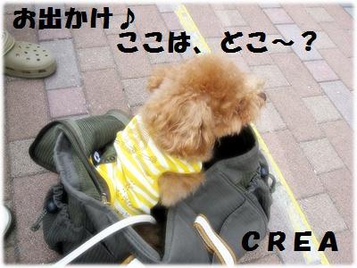 IMG_5987[1] (2)