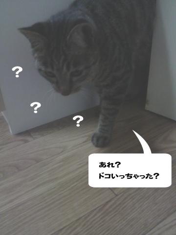 20090415_4.jpg