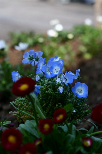 ポットのまま放置されてる花たち・・・