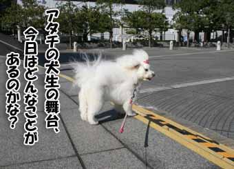 20081108IMG_0123.jpg