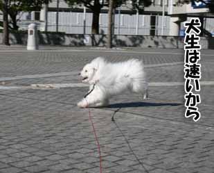 20081108IMG_0136.jpg