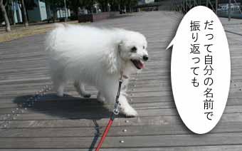 20081110IMG_9088.jpg