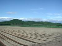 ゴボウ畑から見る嵐山展望台付近、、、緑が目にしみますね~