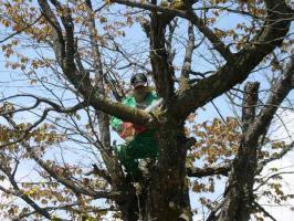樹の上でもへっちゃら! Oさん。(@_@)