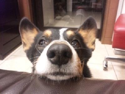 「ぼくのでばんはまだですか?」