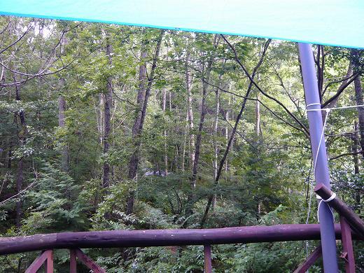 スカウト第二隊の森